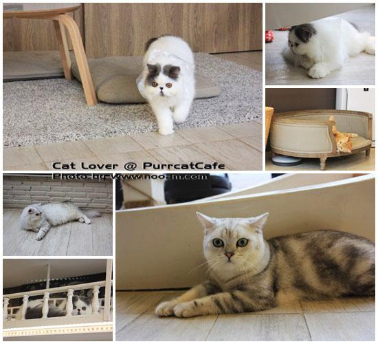 Purr Cat Cafe Club คาเฟ่สำหรับคนรักแมว เค้กอร่อย รับอาบน้ำแมวด้วย ตั้งอยู่ในซอยสุขุมวิท53 เจ้าของคือ คุณเพชร