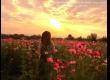 พาเที่ยว จิมทอมสัน ฟาร์ม 2557 (Jim Thompson Farm) สวนดอกไม้สวยๆ ปักธงชัย นครราชสีมา