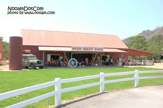 รีวิว swiss sheep farm ฟาร์มแกะและที่เที่ยวชะอำ ตรงข้ามกับซานโตรีนี่ พาร์คทางไปหัวหิน จังหวัดเพชรบุรี